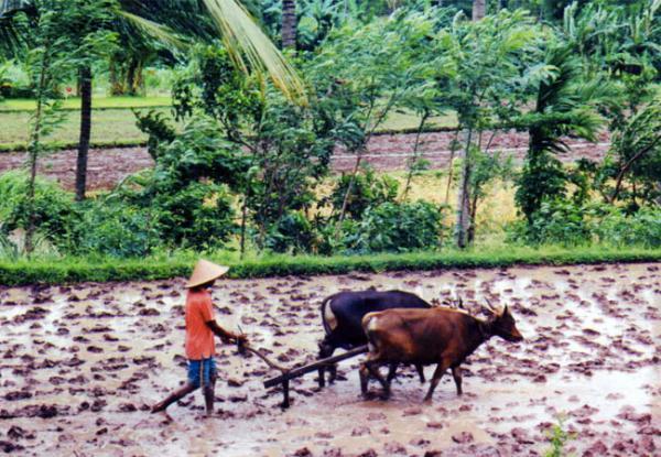 full_farm_1426738124
