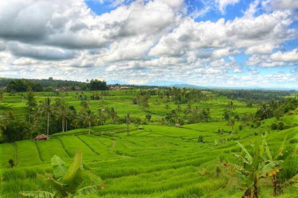 full_jatiluwih_rice_field_1426738774