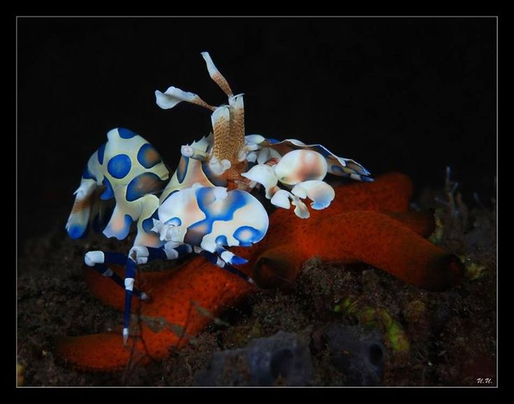 a7e1f2c5baeec8bbc927eb3b56469683--harley-quinn-saltwater-tank