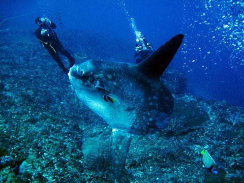 nusa_penida_bali_diving_indonesia11
