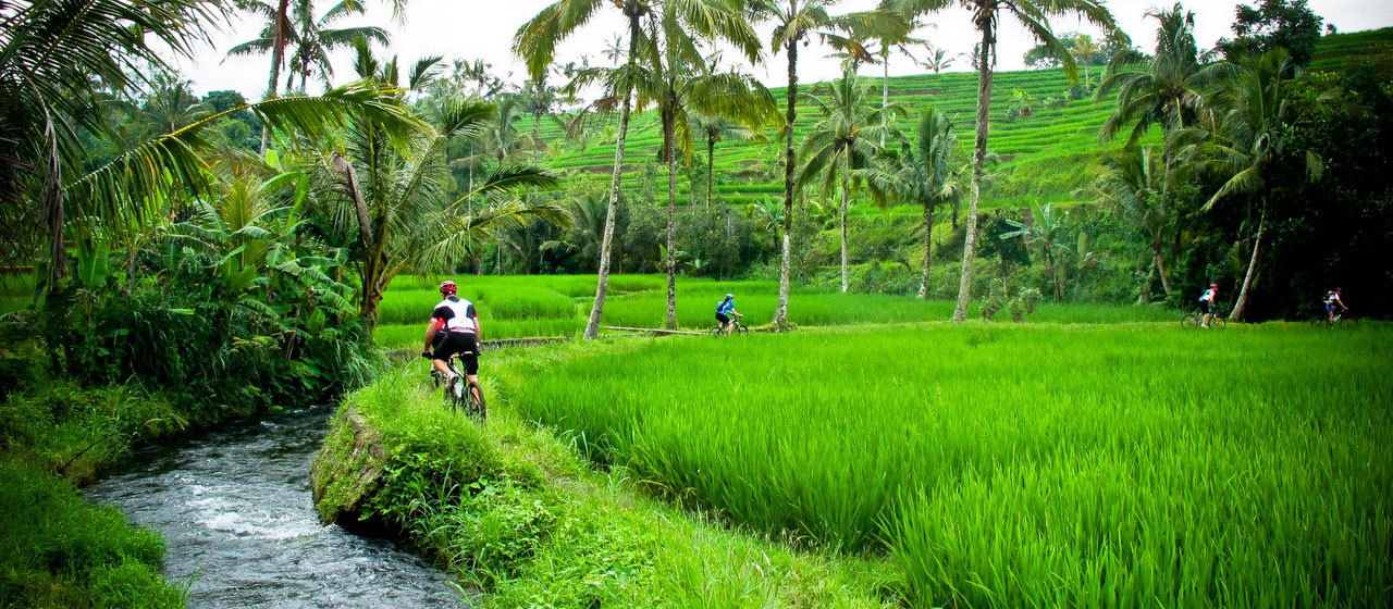 Bike with rice field view