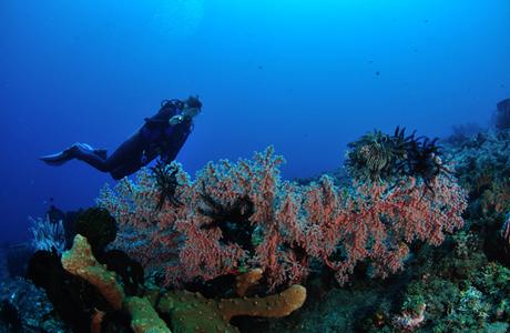 Kubu reef 8