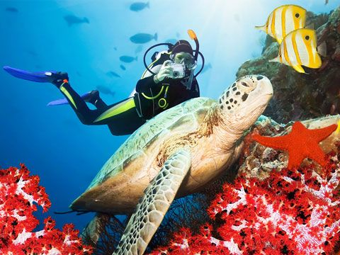 amed_indonesia_bali_diving2