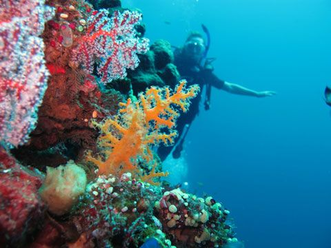 amed_indonesia_bali_diving4