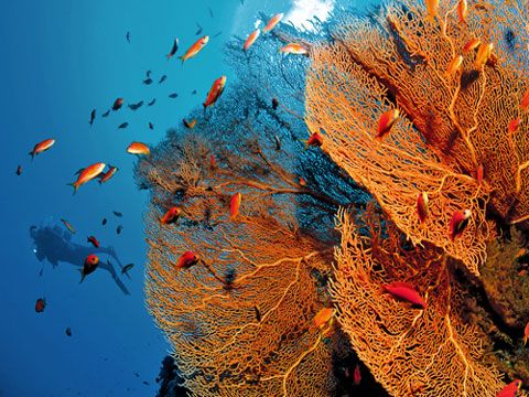 amed_indonesia_bali_diving5