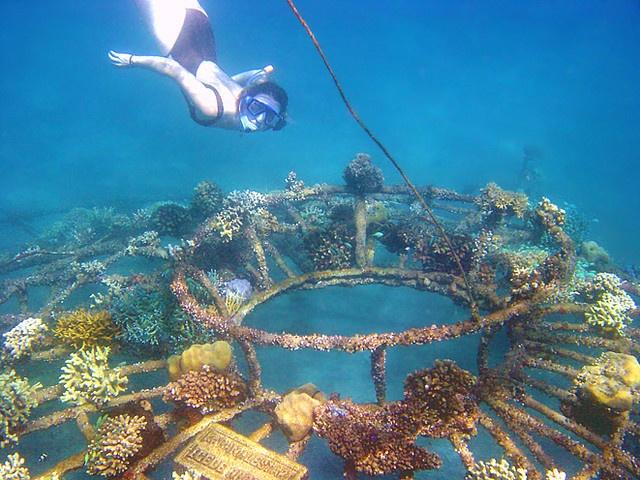 712975d7a67ba79d4ee813487e1eafbb--lombok-snorkeling