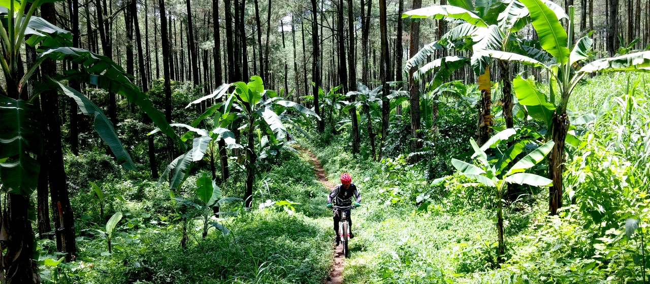 Biking with jungle side